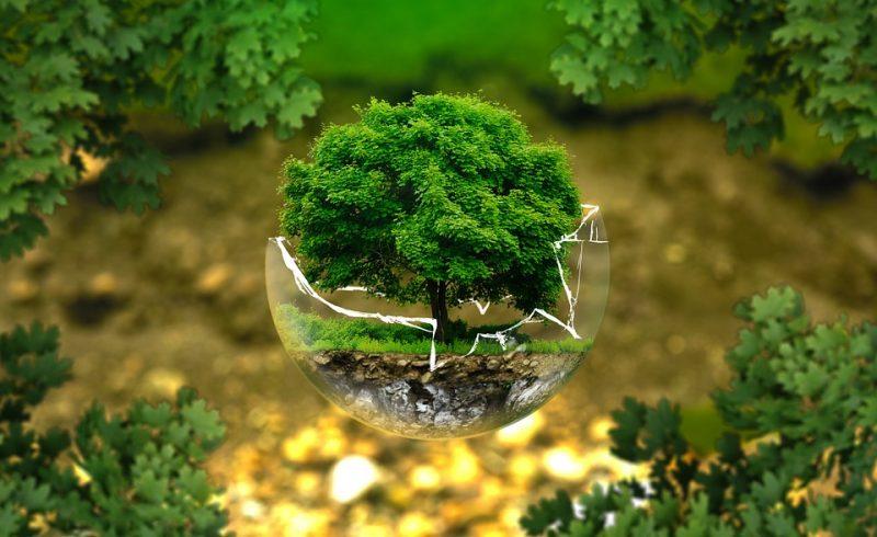 La sostenibilità per SOLAS, vernici naturali